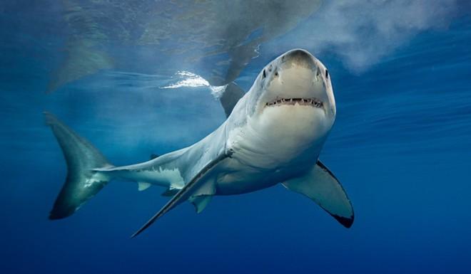 Bất ngờ bị cá mập tấn công, cô gái trẻ được giải cứu nhờ 5 cú đấm uy lực của bố vào thẳng mặt con thủy quái - Ảnh 2.