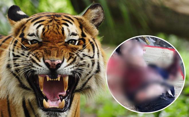 Người đàn ông bị hổ cắn đứt hai tay ở Bình Dương 'có thể đã vào trêu đùa hổ'?