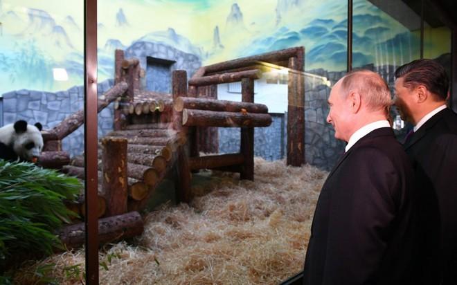 Lãnh đạo Nga - Trung ngoại giao gấu trúc tại vườn thú Matxcơva - Ảnh 2.