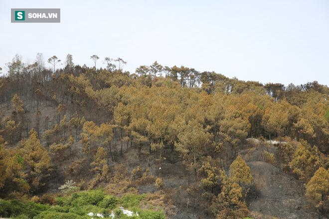 50ha rừng phòng hộ hoang tàn sau nhiều ngày cháy, người dân hoang mang trực chiến - Ảnh 2.