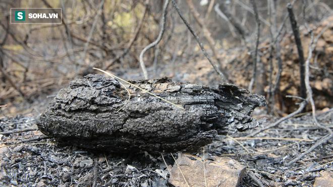 50ha rừng phòng hộ hoang tàn sau nhiều ngày cháy, người dân hoang mang trực chiến - Ảnh 3.