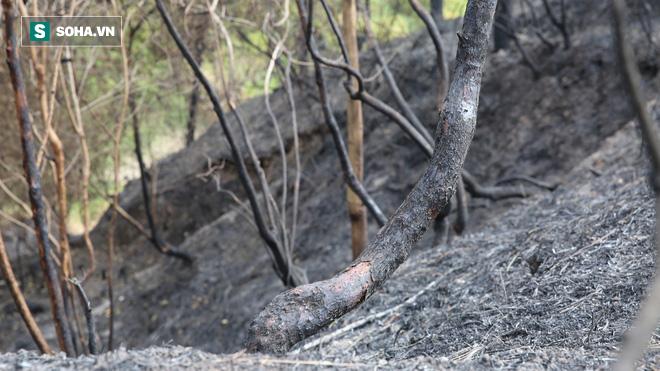 50ha rừng phòng hộ hoang tàn sau nhiều ngày cháy, người dân hoang mang trực chiến - Ảnh 5.