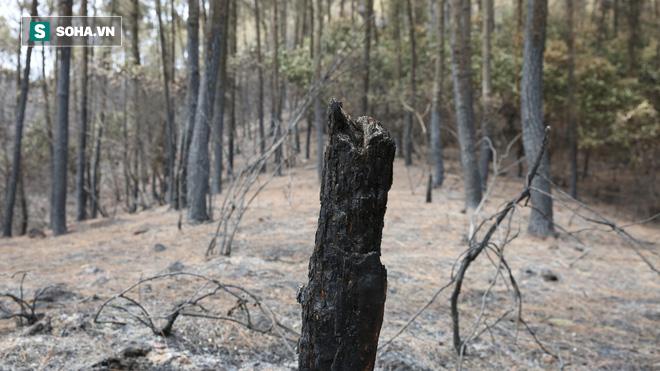 50ha rừng phòng hộ hoang tàn sau nhiều ngày cháy, người dân hoang mang trực chiến - Ảnh 7.