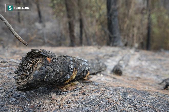 50ha rừng phòng hộ hoang tàn sau nhiều ngày cháy, người dân hoang mang trực chiến - Ảnh 8.