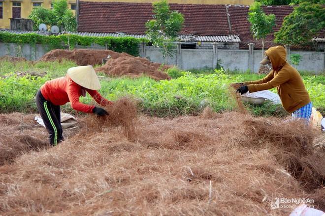 Nghệ An: Về nơi người dân đổ xô vào rừng nhặt thứ lá quý như vàng - Ảnh 7.