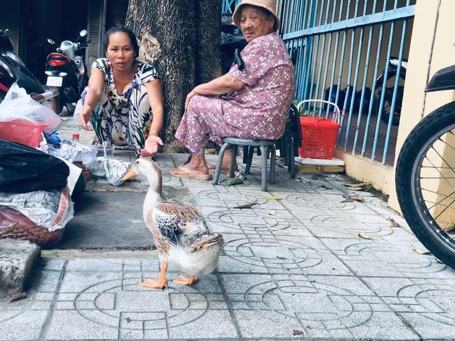 Hiếm muộn 24 năm, vợ chồng Sài Gòn gọi vịt là con, ăn ngủ cùng - Ảnh 2.