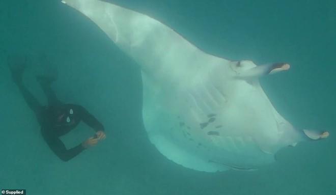 Cá đuối khổng lồ tiếp cận thợ lặn để làm một điều khó tin: Đó là gì? - Ảnh 4.
