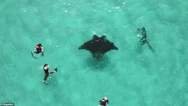 Cá đuối khổng lồ tiếp cận thợ lặn để làm một điều khó tin: Đó là gì? - Ảnh 5.