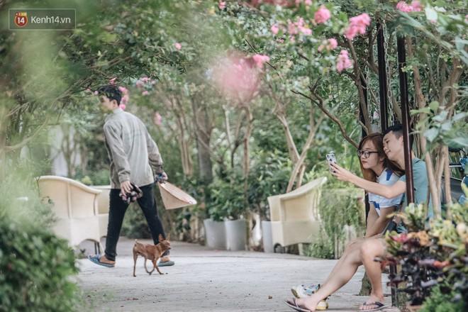 Chùm ảnh: Con đường ở Hà Nội được tạo nên bởi 100 gốc hoa tường vi đẹp như khu vườn cổ tích - Ảnh 8.