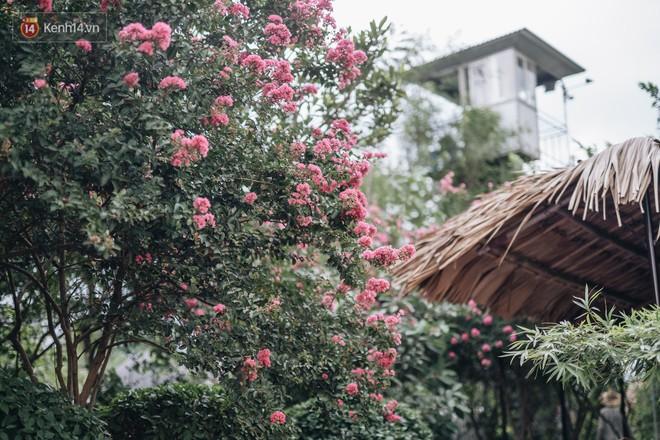 Chùm ảnh: Con đường ở Hà Nội được tạo nên bởi 100 gốc hoa tường vi đẹp như khu vườn cổ tích - Ảnh 9.