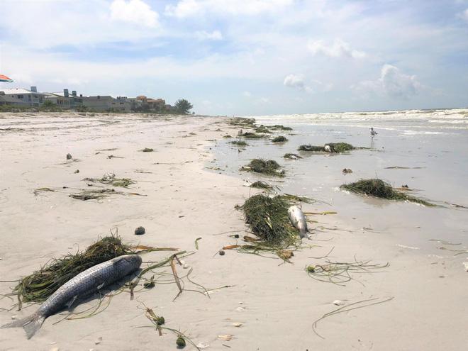 Góc thắc mắc: Bão lốc là ác mộng với người đi biển, nhưng các sinh vật biển thì sao nhỉ? - Ảnh 3.