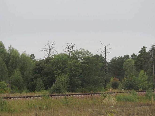 Chuyện gì sẽ xảy ra nếu lúc này bạn đến sống tại Vùng đất chết Chernobyl? - Ảnh 3.