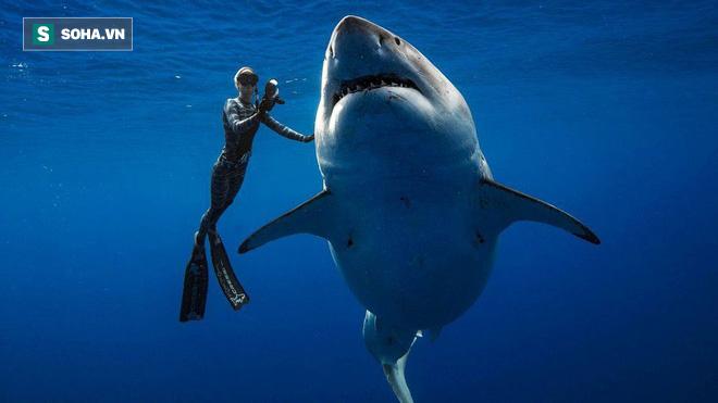 Sự kiện trăm năm có một: Cá mập khổng lồ có hành vi kỳ lạ, khoa học giải thích ra sao? - Ảnh 1.