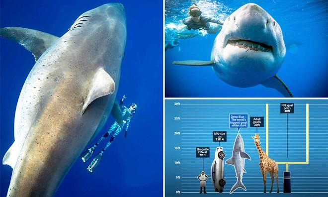Sự kiện trăm năm có một: Cá mập khổng lồ có hành vi kỳ lạ, khoa học giải thích ra sao? - Ảnh 5.