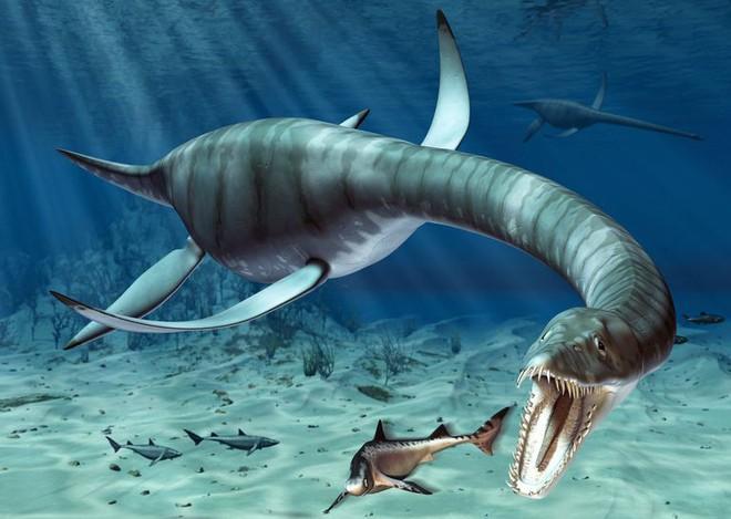 Nghi vấn quái vật hồ Loch Ness là thằn lằn đầu rắn khổng lồ, sống cách đây 245 triệu năm - Ảnh 1.