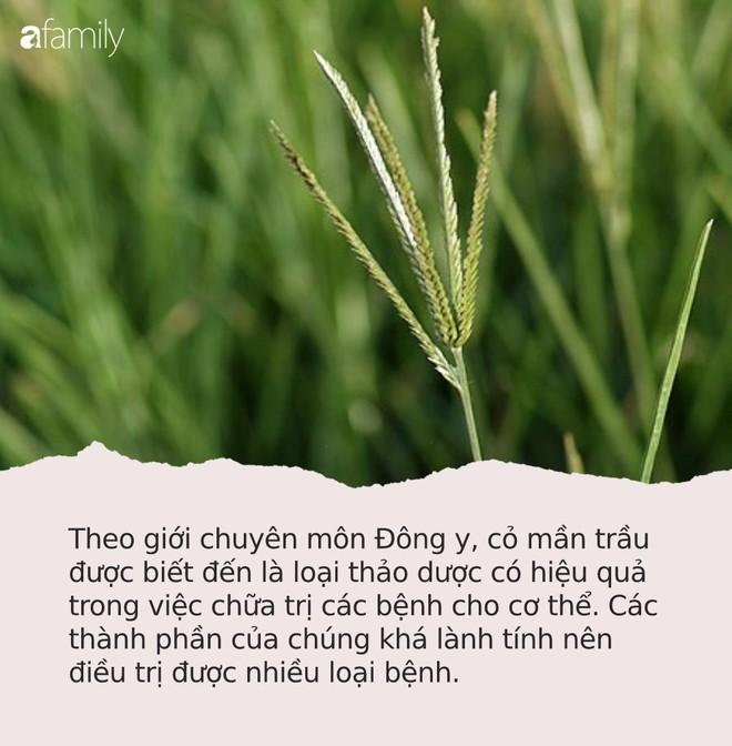 Loại cỏ rất quý nhưng ở Việt Nam chỉ cho bò ăn: Chuyên gia chỉ tác dụng ai biết cũng tiếc - Ảnh 2.