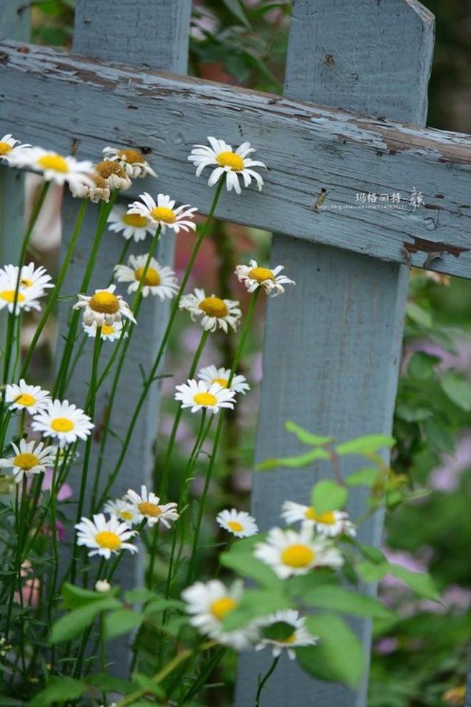 Chìm đắm trong khu vườn đẹp như mê cung nhờ bàn tay khéo léo của người đàn ông yêu thích làm vườn - Ảnh 10.