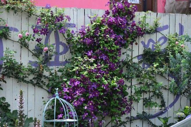 Chìm đắm trong khu vườn đẹp như mê cung nhờ bàn tay khéo léo của người đàn ông yêu thích làm vườn - Ảnh 11.