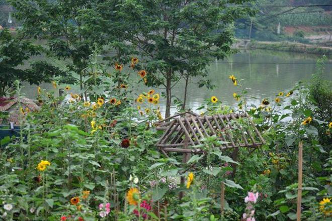 Chìm đắm trong khu vườn đẹp như mê cung nhờ bàn tay khéo léo của người đàn ông yêu thích làm vườn - Ảnh 23.