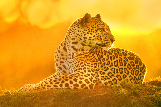 Ngũ đại dã thú châu Phi: Bí mật nguy hiểm của những loài động vật khổng lồ xứ hoang dã - Ảnh 2.