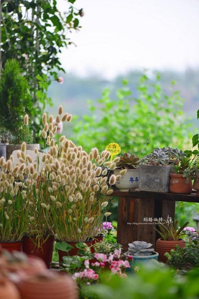 Chìm đắm trong khu vườn đẹp như mê cung nhờ bàn tay khéo léo của người đàn ông yêu thích làm vườn - Ảnh 25.