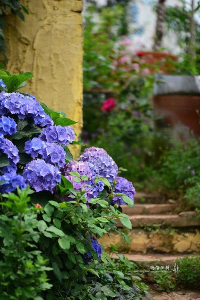 Chìm đắm trong khu vườn đẹp như mê cung nhờ bàn tay khéo léo của người đàn ông yêu thích làm vườn - Ảnh 32.