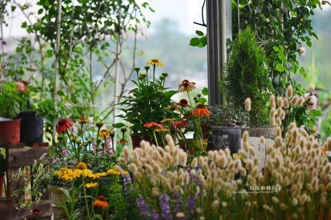 Chìm đắm trong khu vườn đẹp như mê cung nhờ bàn tay khéo léo của người đàn ông yêu thích làm vườn - Ảnh 26.