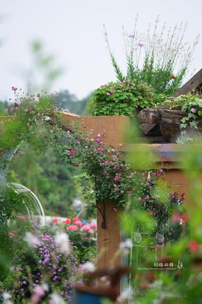 Chìm đắm trong khu vườn đẹp như mê cung nhờ bàn tay khéo léo của người đàn ông yêu thích làm vườn - Ảnh 33.