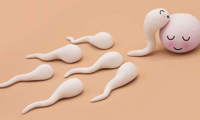 Chuyện chưa kể về cuộc đua của tinh trùng: Nhẩn nha, thoải mái, khốc liệt và không phải càng nhiều càng tốt - Ảnh 2.