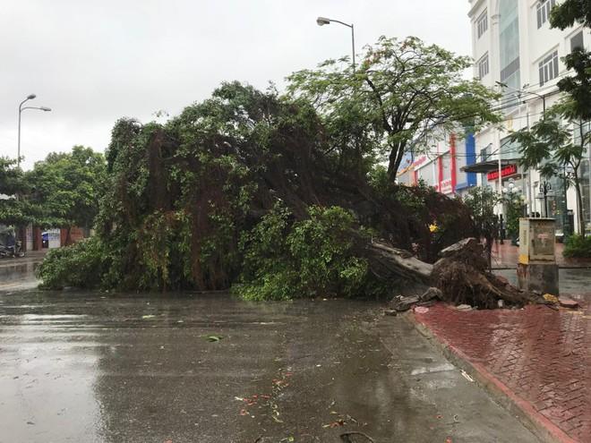 Hàng loạt cây đổ rạp sau khi bão số 2 đổ bộ vào Hải Phòng - Ảnh 2.