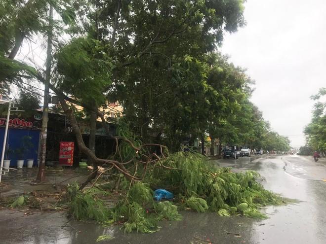 Hàng loạt cây đổ rạp sau khi bão số 2 đổ bộ vào Hải Phòng - Ảnh 3.