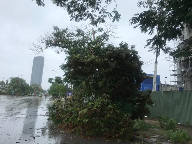 Hàng loạt cây đổ rạp sau khi bão số 2 đổ bộ vào Hải Phòng - Ảnh 4.