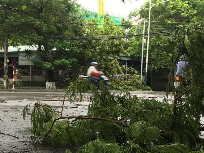 Hàng loạt cây đổ rạp sau khi bão số 2 đổ bộ vào Hải Phòng - Ảnh 7.