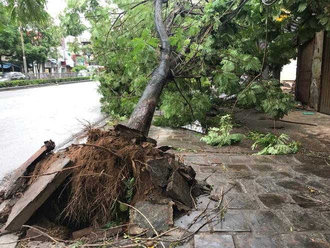 Hàng loạt cây đổ rạp sau khi bão số 2 đổ bộ vào Hải Phòng - Ảnh 6.