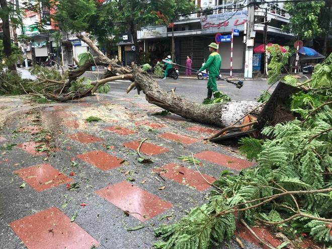 Hàng loạt cây đổ rạp sau khi bão số 2 đổ bộ vào Hải Phòng - Ảnh 5.