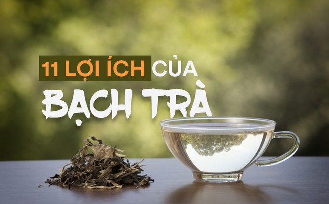 Công dụng tuyệt vời của bạch trà: Đây là lý do món đồ uống này vừa hiếm vừa đắt