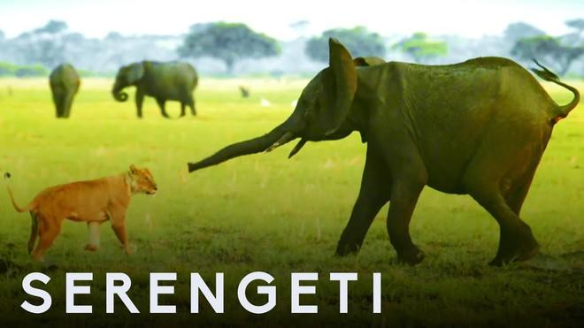 Voi châu Phi nổi điên, lao mình tấn công bầy sư tử để bảo vệ con non - Ảnh 3.