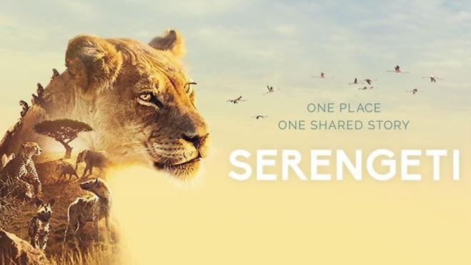 Voi châu Phi nổi điên, lao mình tấn công bầy sư tử để bảo vệ con non - Ảnh 1.