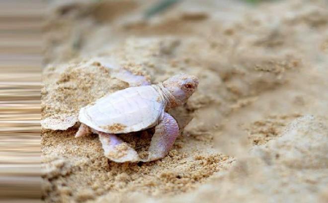 Cả toán lính nhảy xuống sông đều chết đuối, chỉ 1 người sống sót nhờ 1 con rùa