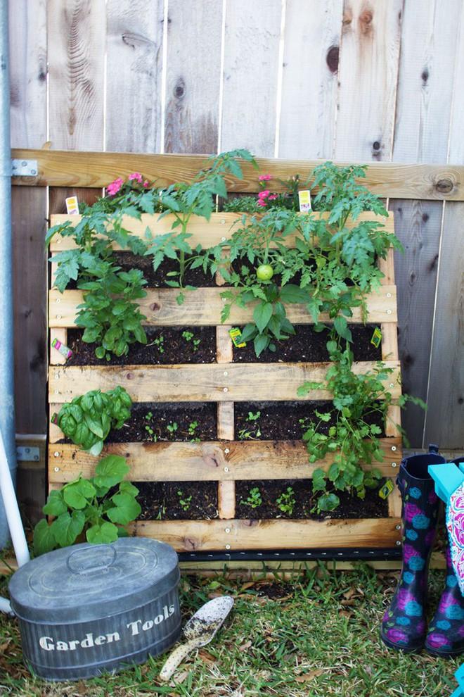 Dù không có nhiều kinh nghiệm trong trồng rau thì với 10 lưu ý dưới đây bạn vẫn có thể sở hữu một vườn rau tươi tốt - Ảnh 3.