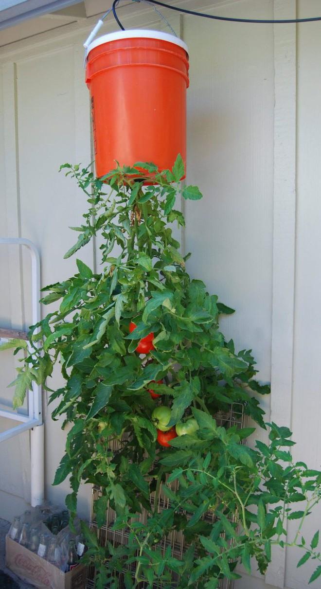 Dù không có nhiều kinh nghiệm trong trồng rau thì với 10 lưu ý dưới đây bạn vẫn có thể sở hữu một vườn rau tươi tốt - Ảnh 4.