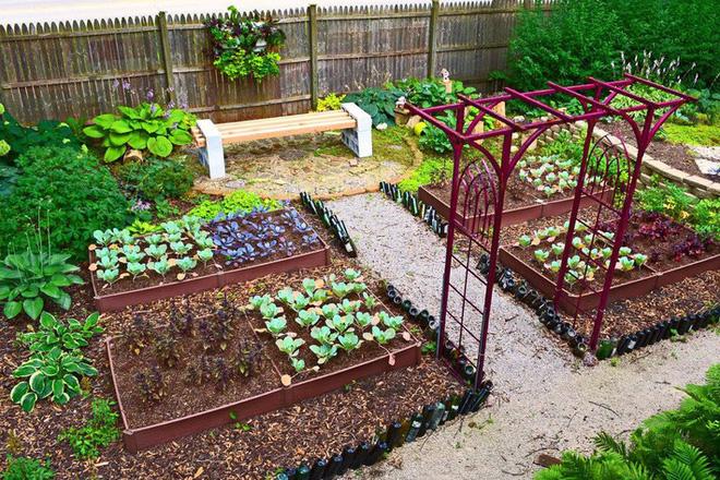 Dù không có nhiều kinh nghiệm trong trồng rau thì với 10 lưu ý dưới đây bạn vẫn có thể sở hữu một vườn rau tươi tốt - Ảnh 5.
