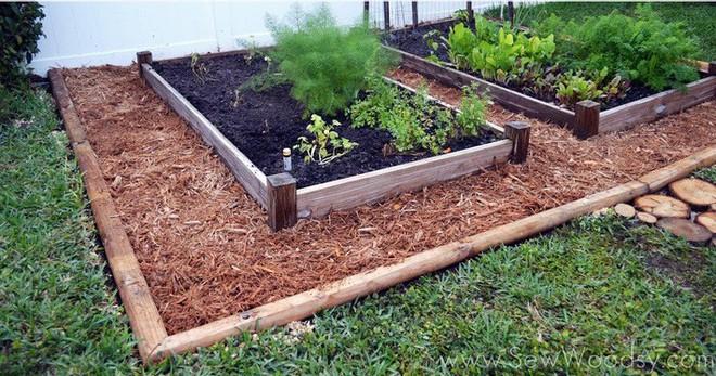 Dù không có nhiều kinh nghiệm trong trồng rau thì với 10 lưu ý dưới đây bạn vẫn có thể sở hữu một vườn rau tươi tốt - Ảnh 6.