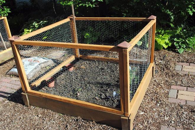 Dù không có nhiều kinh nghiệm trong trồng rau thì với 10 lưu ý dưới đây bạn vẫn có thể sở hữu một vườn rau tươi tốt - Ảnh 7.
