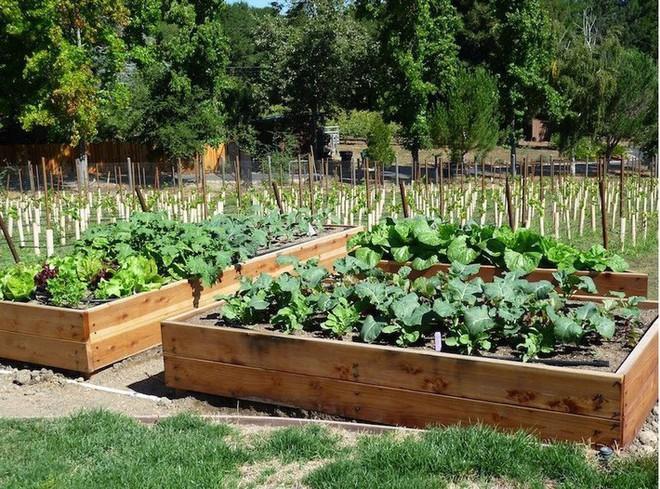 Dù không có nhiều kinh nghiệm trong trồng rau thì với 10 lưu ý dưới đây bạn vẫn có thể sở hữu một vườn rau tươi tốt - Ảnh 8.