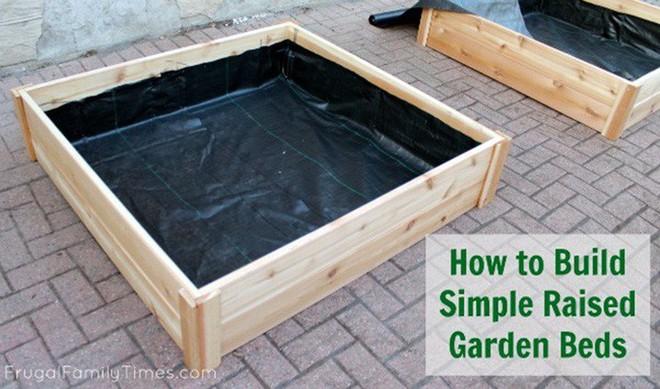Dù không có nhiều kinh nghiệm trong trồng rau thì với 10 lưu ý dưới đây bạn vẫn có thể sở hữu một vườn rau tươi tốt - Ảnh 9.