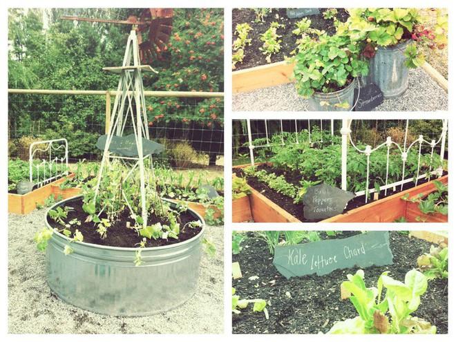 Dù không có nhiều kinh nghiệm trong trồng rau thì với 10 lưu ý dưới đây bạn vẫn có thể sở hữu một vườn rau tươi tốt - Ảnh 10.