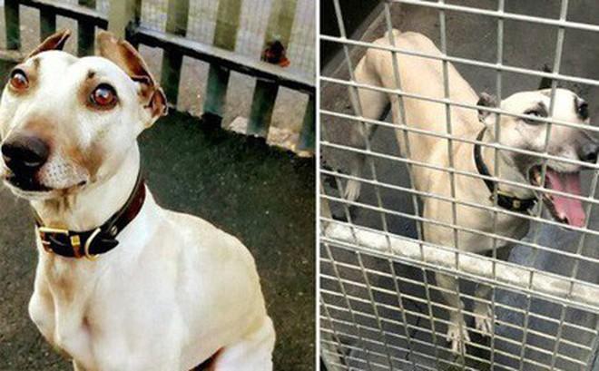 900 ngày cô đơn mỏi mòn chờ đợi người chủ định mệnh của chú chó bất hạnh từng 3 lần bị bỏ rơi
