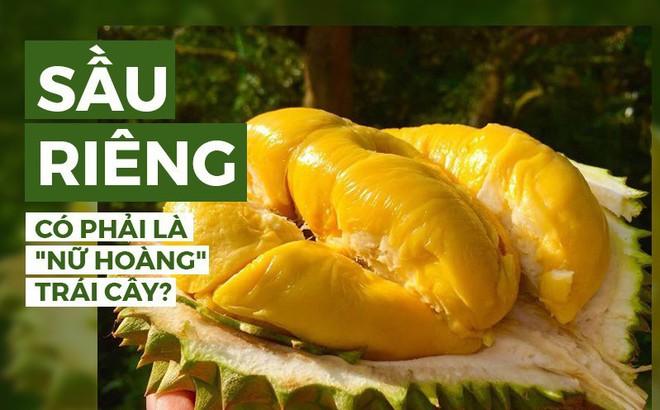 """8 ưu điểm vượt trội khiến cho sầu riêng được đặt mỹ danh là """"nữ hoàng"""" trái cây nhiệt đới"""