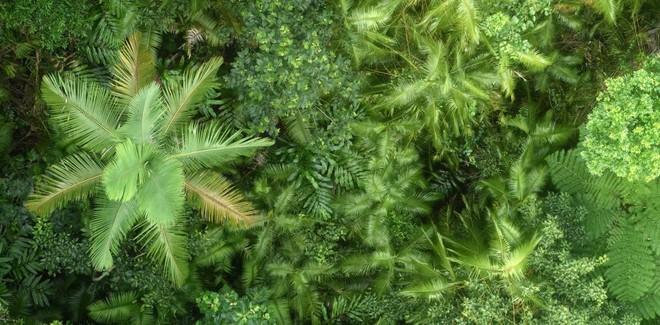 Các nhà khoa học cảnh báo: Cây xanh phát triển nhanh do hấp thụ CO2 nhưng điều này chỉ diễn ra được 80 năm nữa - Ảnh 1.